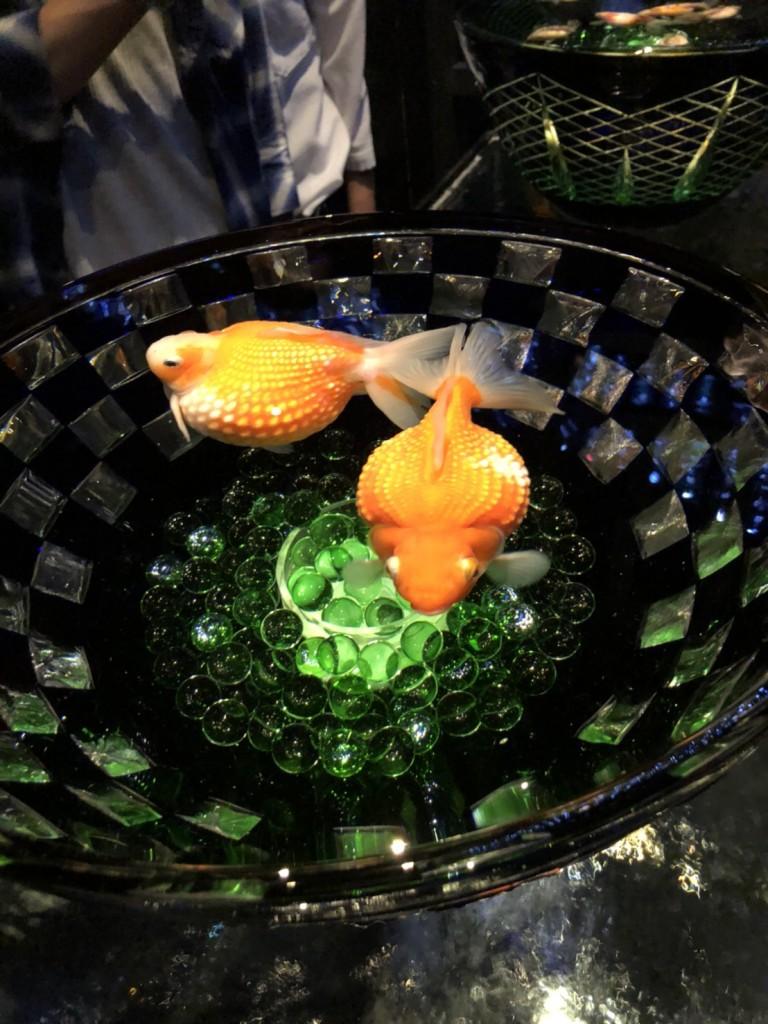 でかい金魚